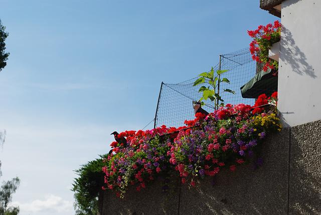 IMGP4781_katze-auf-dem-balkon
