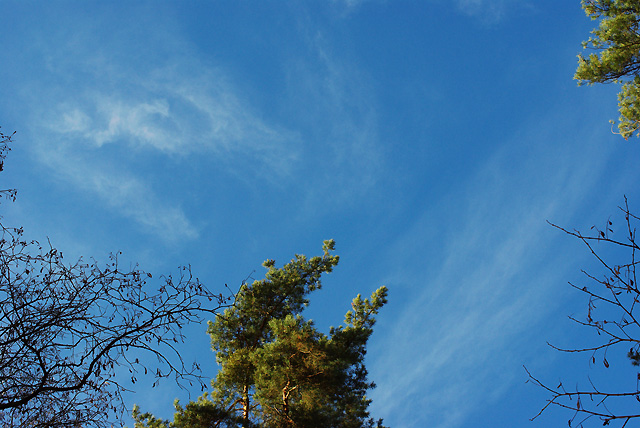 IMGP7114_krone-blauer-himmel