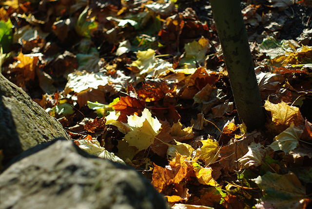 IMGP9006_laub-autumn-leaves