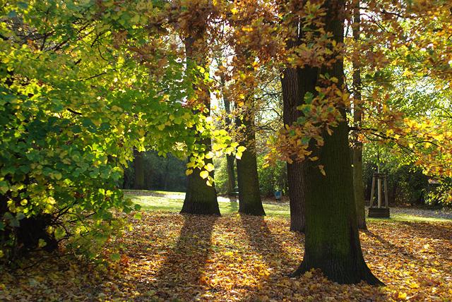 IMGP9154_wiese-viktoriapark-gegenlicht