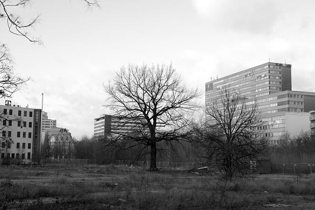 IMGP9351_brachflaeche-anhalter-bahnhof_SW