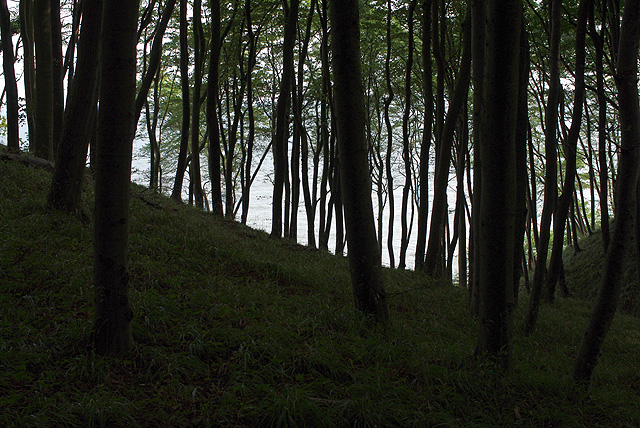IMGP10131_wald-meer-im-hintergrund_B