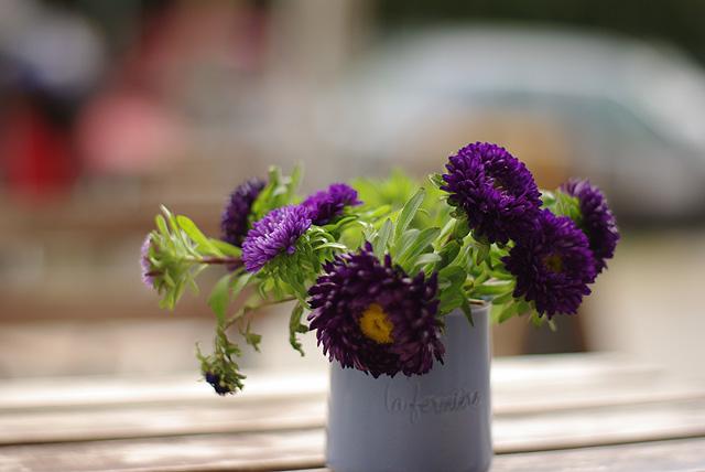 IMGP10153_violette-blueten