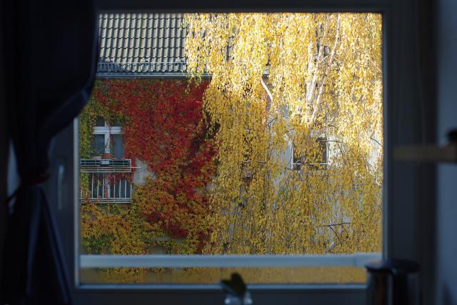 IMGP10209_kuechenfenster-herbstblaetter